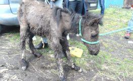 Mieszkaniec Rudy Śląskiej znęcał się nad zwierzętami
